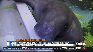 Museum ponders 3rd party review after 69-yr-old manatee dies - Video