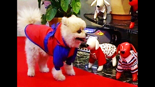 Catwalk Dogs - Video
