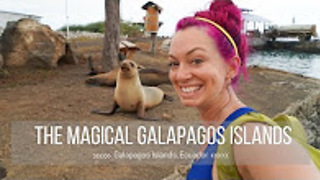 Traveling to the Galapagos Islands - Video