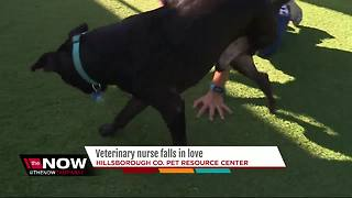 Hillsborough County vet tech rescues, falls in love with injured dog - Video