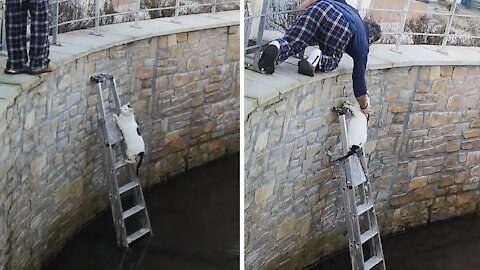 Man places ladder in river for fallen cat to climb