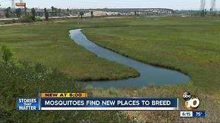Mosquitos finding new places to breed - Video