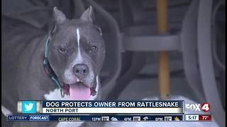 Pit Bull saves owner from snake bite - Video