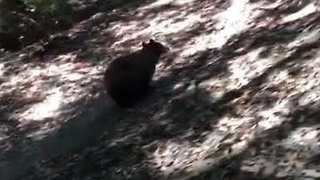 Charging Bear Interrupts Family Hike in California - Video