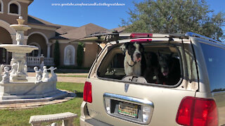 Great Danes Say Goodbye To Their Casa Bella Florida Home