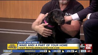Pet of the week: Andi is a sweet girl who loves belly rubs and scritches