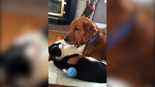 Unlikely Animal Friendship Will Set Your Relationship Goals - Video
