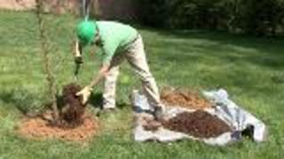 Fertilizing Trees - Video