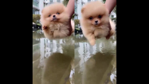 The Cute of dog is learn swimming
