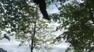 Black bear rescued from tree - Video