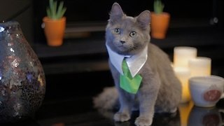 Hilarious Sketch Shows What Would Happen if Cats Could Buy Real Estate - Video