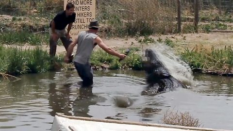 He could have needed a hook! Livestreamer trying to get perfect snap almost has hand bitten off by 12-foot-long alligator