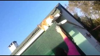 Well Trained Cat Climbs Down From Roof via Owners Arm - Video