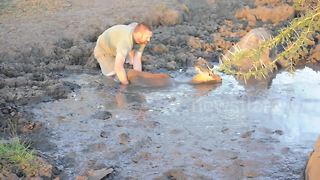 Man Rescues Impala Stuck In Mud Pool - Video