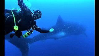 Scuba diver performs world's most perfect photo bomb