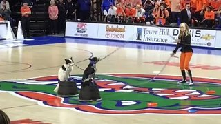 Dog Entertains Crowd at Florida Gators Game by Skipping Rope