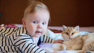 Feline friends – Boy becomes best friends with cats