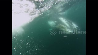 Watch the moment a humpback whale nearly crushes a diver - Video
