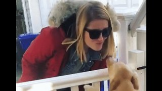 Welcome Home! Dog Bounces for Joy as it Greets Owner Returning From Work