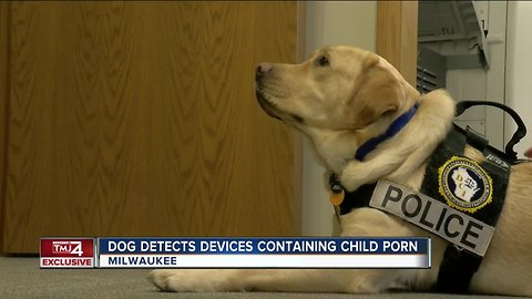 One-of-a-kind dog helps sniff out child pornography in Wisconsin