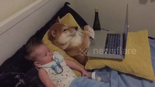 Baby And A Dog Love Watching Nursery Rhymes Together