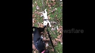 This dog really doesn't want his first walkies to end