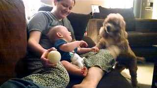 Baby Giggles at Cute Cocker Spaniel