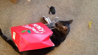 Cat Gets Bested By A Paper Bag - Video
