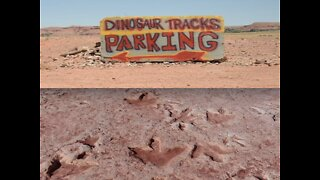 JURASSIC ARIZONA! Dinos found in our state - ABC15 Digital