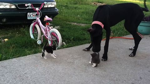Tiny Newborn Kittens Meet A Giant Dog. What Do You Think Happens Next?