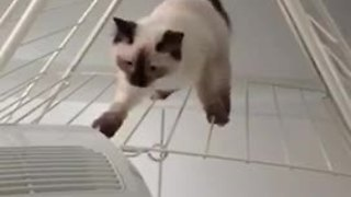 Clumsy kitten struggles to walk on washing rack - Video
