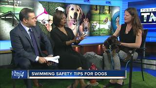 Ask the Expert: Dog swimming safety - Video