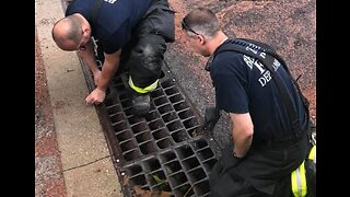 Illinois Firefighters Rescue 6 Ducklings From Storm Drain