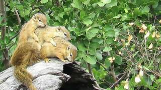 Cute squirrels snuggle together during freezing weather