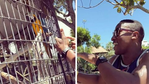 Beat-loving bird hilariously bops along with man's spontaneous rap at zoo, even adding its own verse
