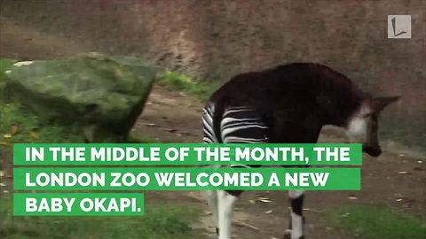 London Zoo Names Newborn Animal after Royal-to-Be Meghan Markle