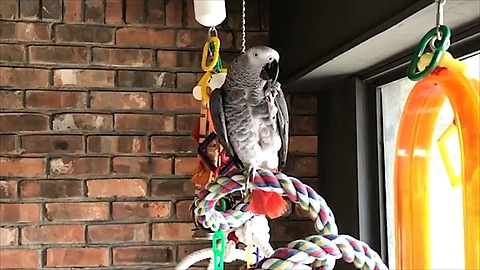 Imaginative Parrot Eats An Air Cookie