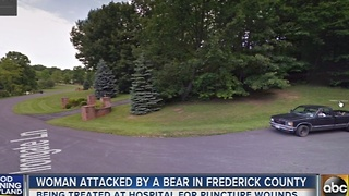 Woman attacked by a bear in Frederick County