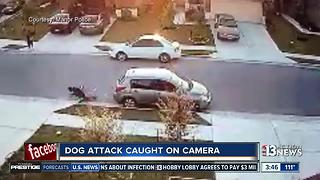 Dog attack in Texas caught on camera - Video