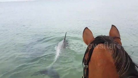 Spirited Horse Jumps In Ocean For A Swim With Dolphins