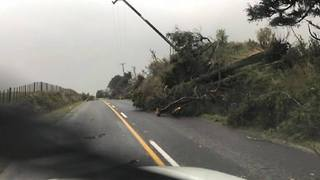 Tree and Power Lines Toppled After Tornado Rips Through North Island - Video