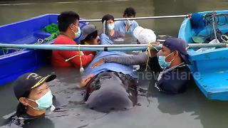 Whale rescued after swallowing 8kg of plastic pollution - Video