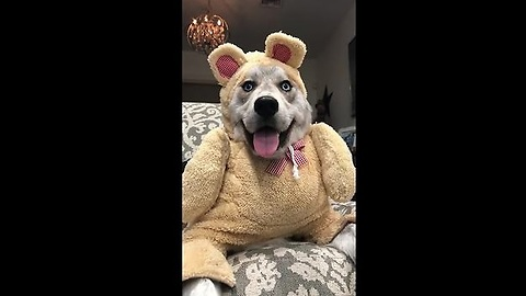 Sign up for free bear hugs
