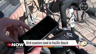 Bird scooters land in Pacific Beach - Video