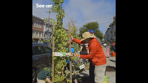 Restoring Trees and Community in San Francisco