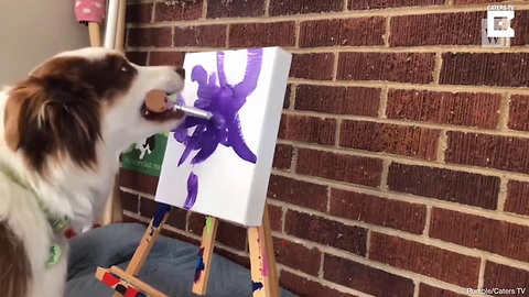 Watch This Talented Australian Shepherd Paint Masterpieces for Charity