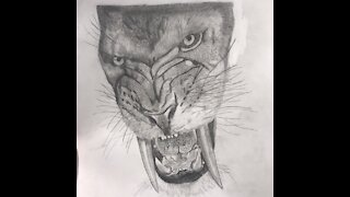 Saber-Toothed Cat Drawing Time-Lapse