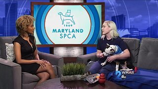 MDSPCA - National Love Your Pet Day