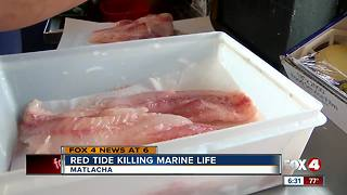 Red tide's affect on marine life - Video