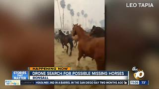 Drone search for possible missing horses following Lilac Fire - Video